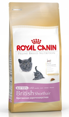 royal canin kitten british shorthair 10kg. Black Bedroom Furniture Sets. Home Design Ideas