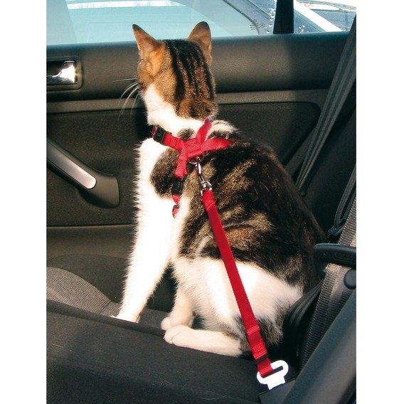 Postroj do auta pro kočku