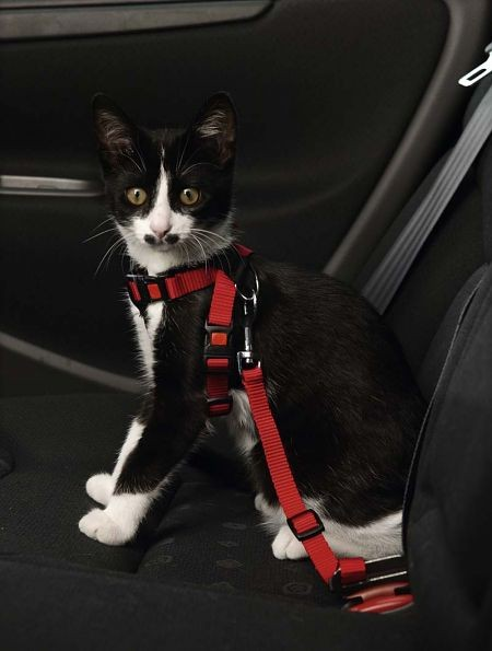 Postroj do auta pro kočku Karlie