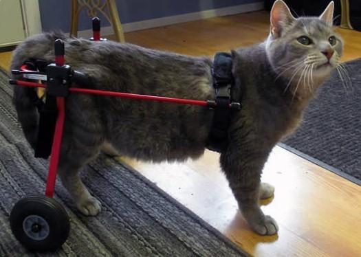 Invalidní vozík K-9 Cart vel. S